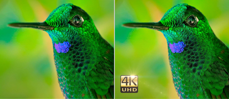 Optoma 4K Beamer UHD 51 GROBI Edition